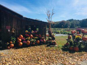 autumn farmstand whately